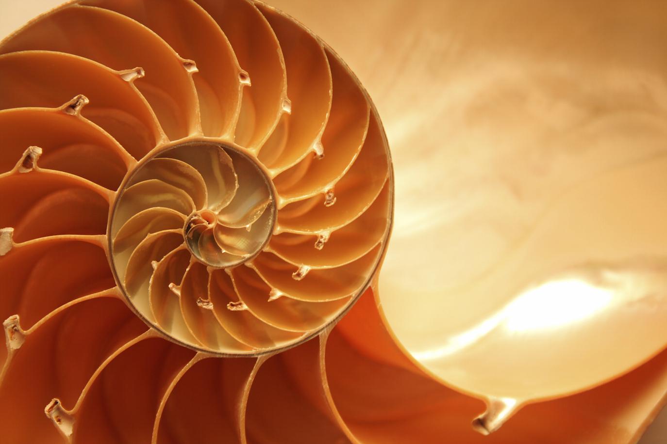 iStock-7160629-L-Nautilus-Shell-copie